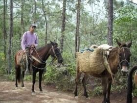 mules with guide dominican rafa