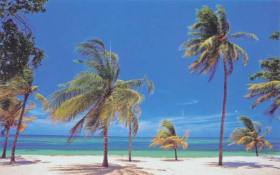 Palms on the Varadero beach