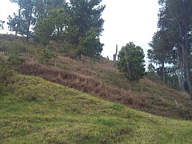 Property land for sale in Constanza